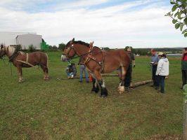 Bild zu APRI Grundkurs Arbeitspferd 2 Fahren vom Boden