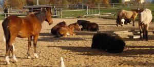 Bild zu Das Wesen des Pferdes - Erwachsenenkurs -