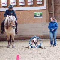 Bild zu Horse and Dog Trail