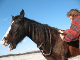 Bild zu Entspannungsmassage für Pferde