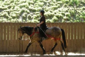 Bild zu Offener Centered Riding® Kurs mit Angelika Engberg