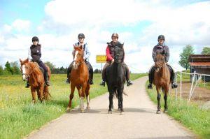 Bild zu Osterferien mit Ponys und Pferden, für Kids ab 10 Jahren.
