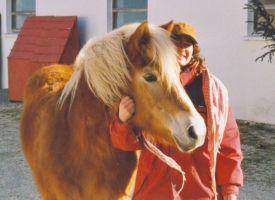 Bild zu Natural Horsemanship Basis/ Trail & Geschicklichkeit