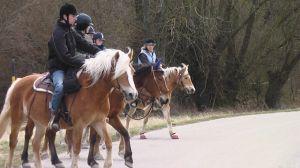 Bild zu Basis-Pass Pferdekunde und Deutscher Reit-Pass