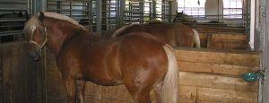 Bild zu Basispass Pferdekunde